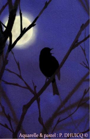 Rouegorge de nuit