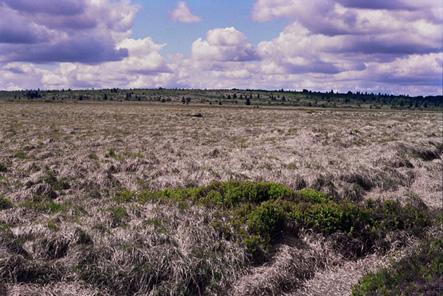 Lande à molinie : un des habitats du Pipit farlouse