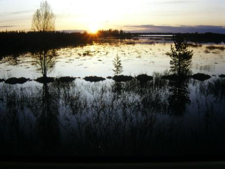 Tourbière en Carélie Finlandaise