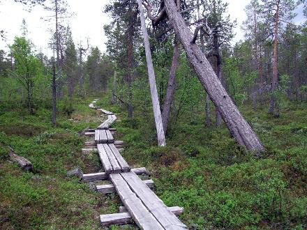 Sentier dans la forêt de Lemmenjoki